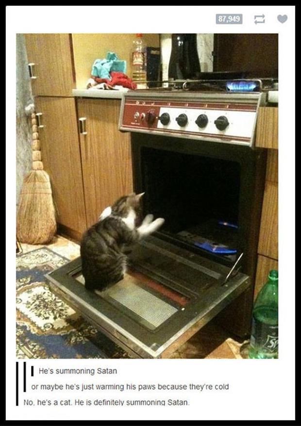 cat playing in the oven