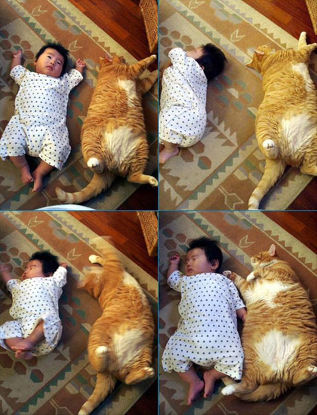 cat sleeping with the baby