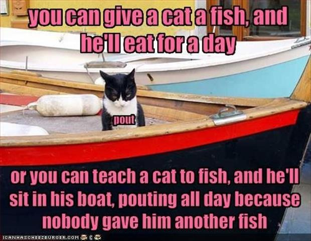 cat wants fish