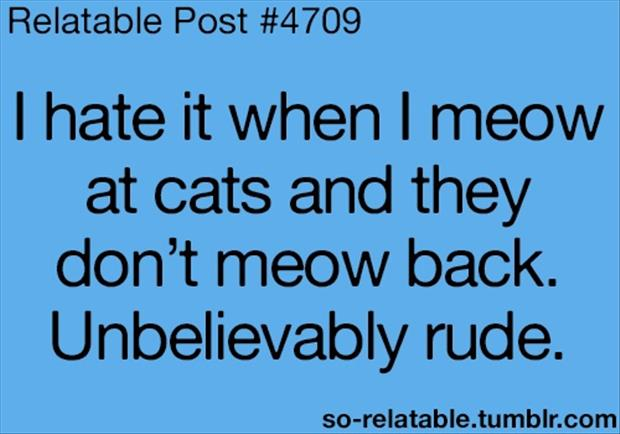 cats are rude