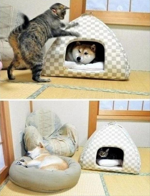 cats sleeps in dog bed