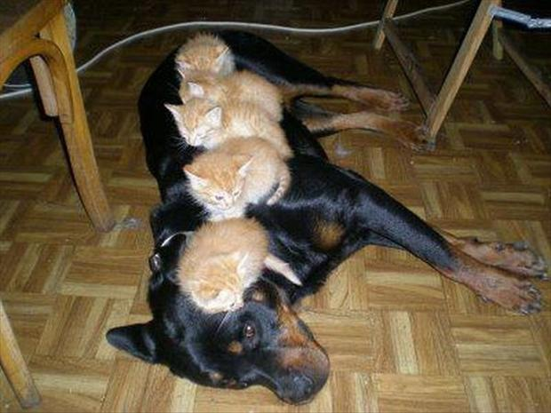 cute kittens, funny dogs
