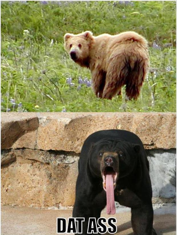 dat ass bears