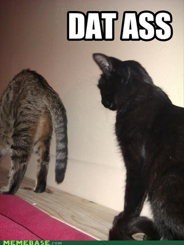 dat ass cats