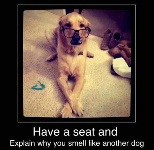 demotivational posters funny dog