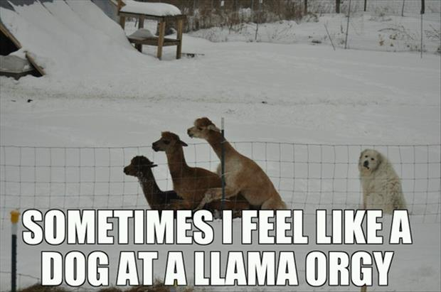 dog at a llama orgy funny quotes
