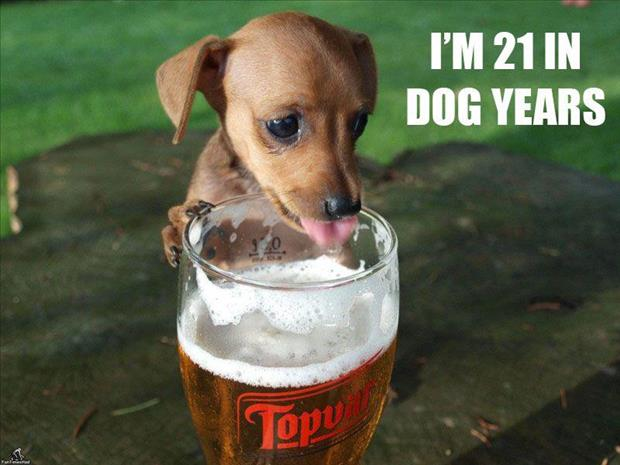 dog drinking beer funny pictures