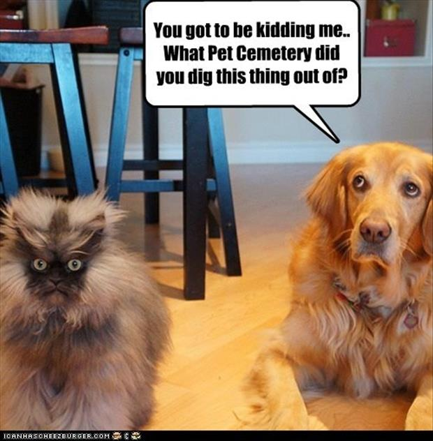 dog hates cat funny pictures
