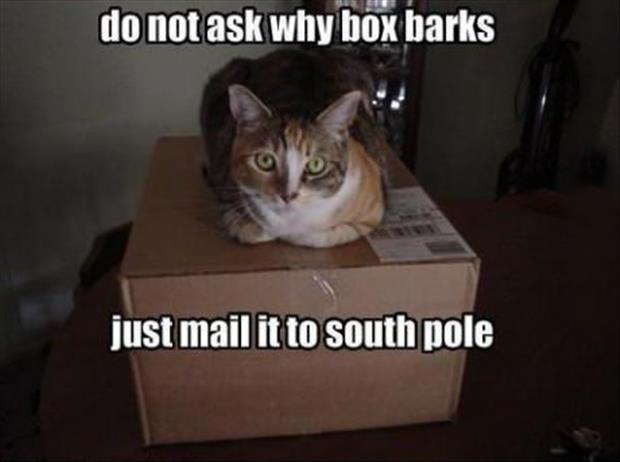 dog is in the box
