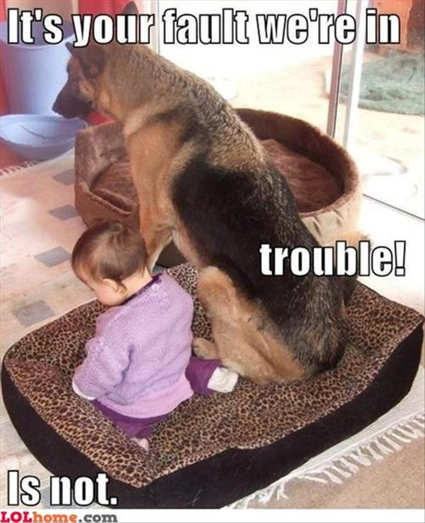 dog is in trouble