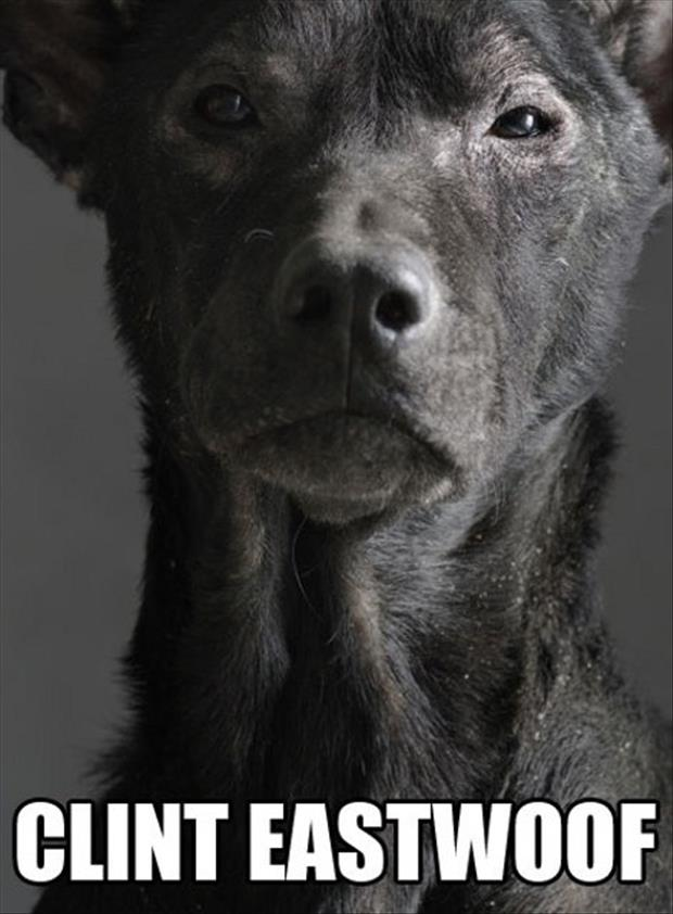 dog looks like clint eastwood