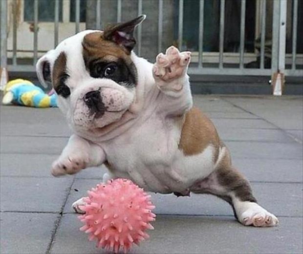 dog playing with rubber ball