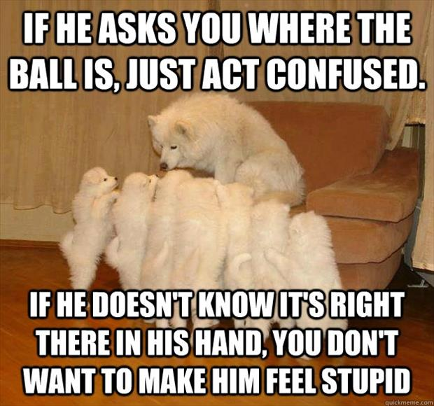 dog school funny pictures