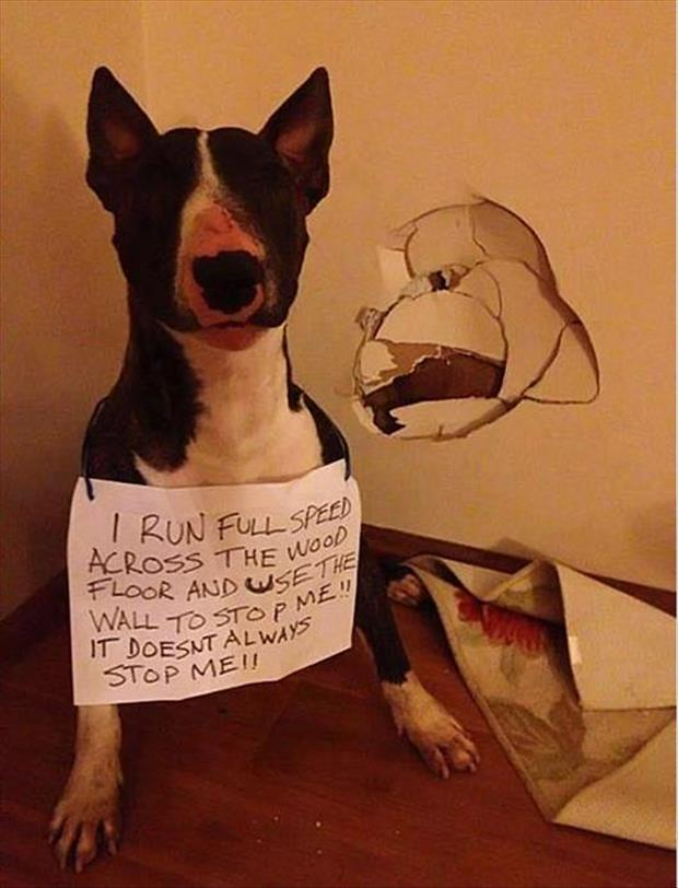 dog shaming funny dumb dogs