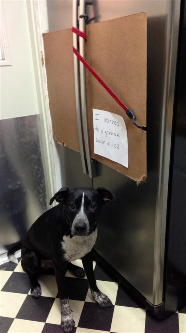 dog shaming funny ice maker