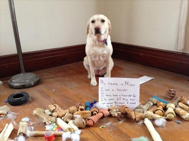 dog shaming hoarder