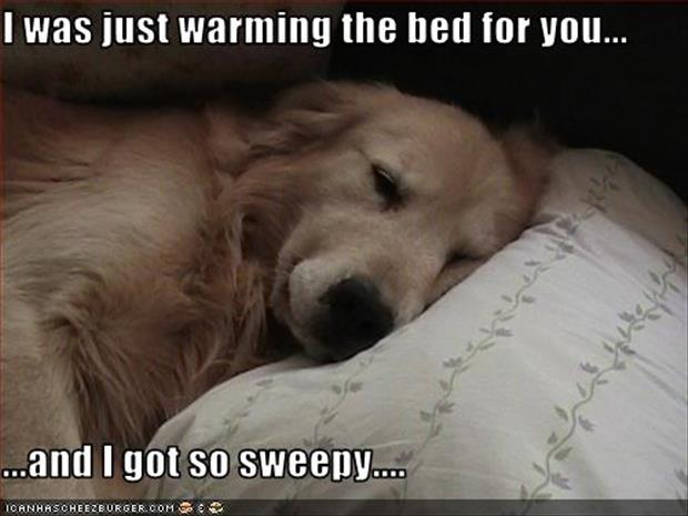 dog sleeping in your bed