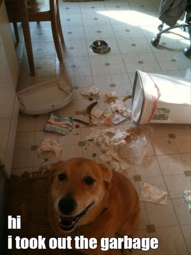 dog took out the garbage