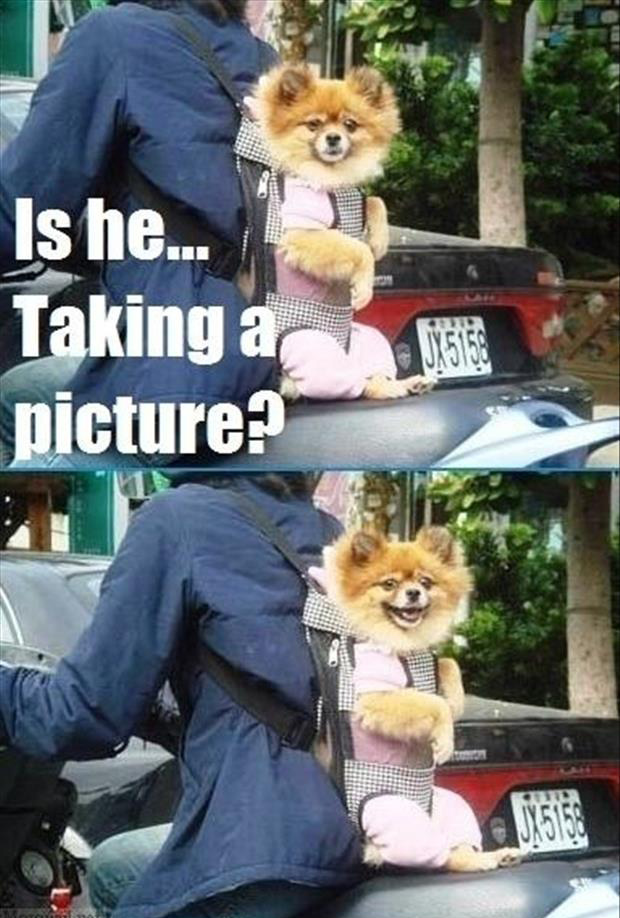 dog wants you to take his picture