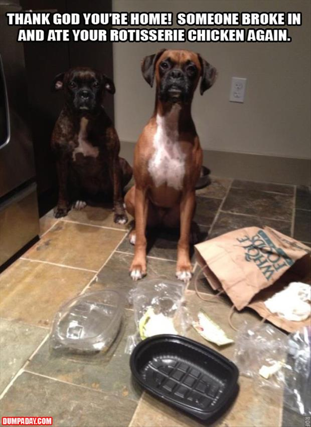 dogs greatful that you are home after someone broke into your house