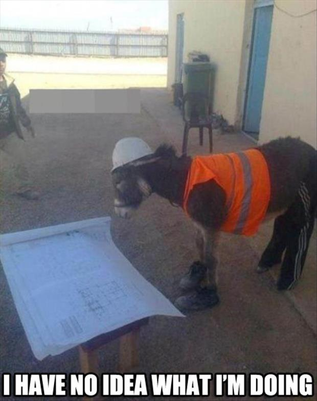 donkey has no idea what he's doing