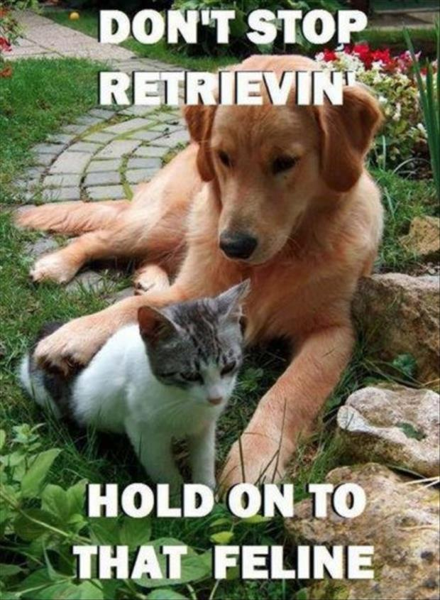 don't stop believing hold onto the feeling again funny dogs