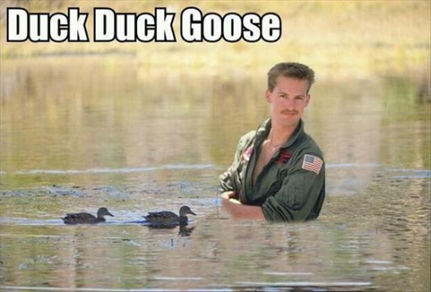duck duck goose funny pictures