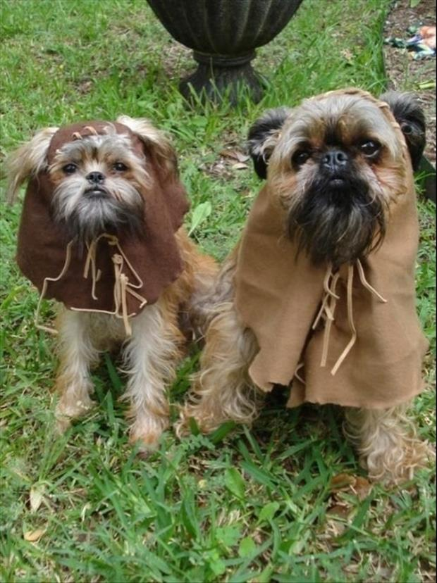 ewok puppies