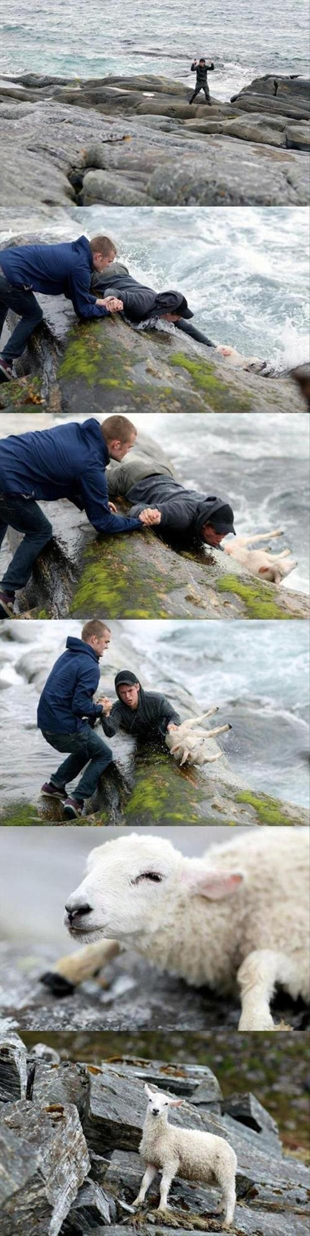 faith in humanity restored (6)