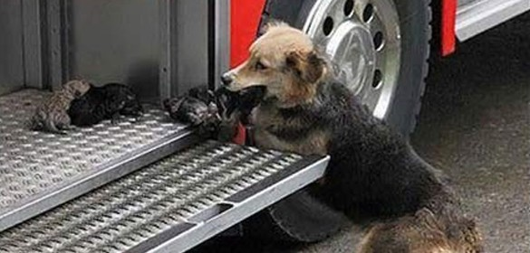 faith in humanity restored dogs thumb