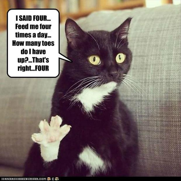 feed your cat four times a day humor images