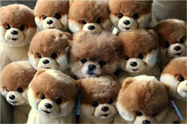 find the real dog