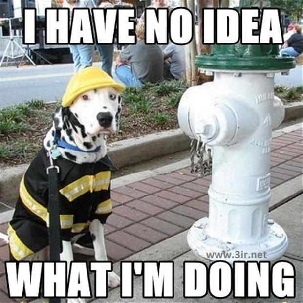 fireman dog has know idea what he's doing