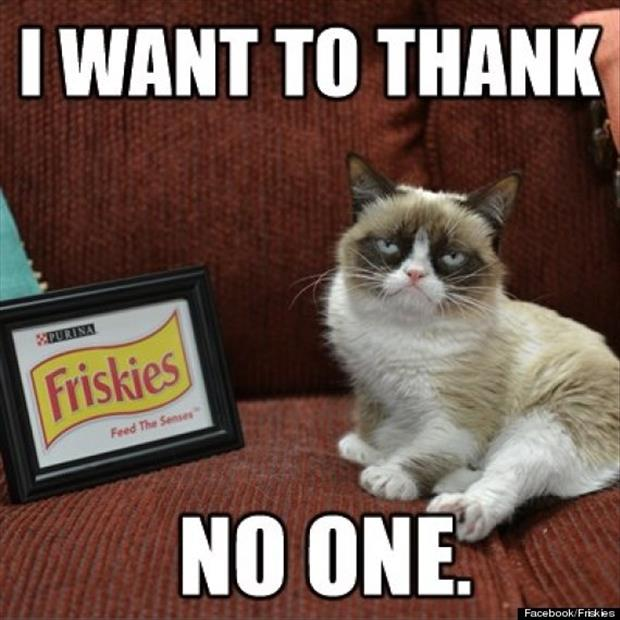 friskies and grumpy cat behind the scenes