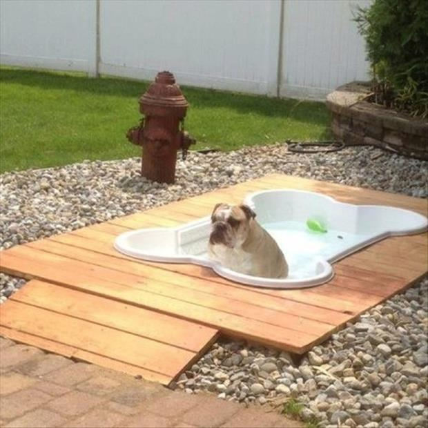 fun outdoor dog pool garden ideas dump a day