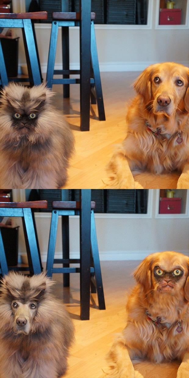funny animals swapping faces