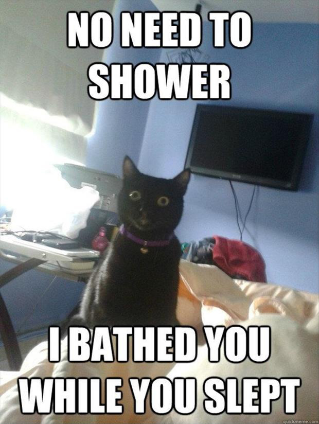 funny cat gave you a bath