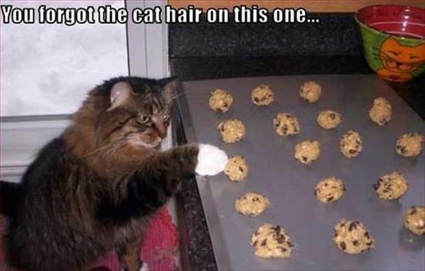 funny cat hair on food