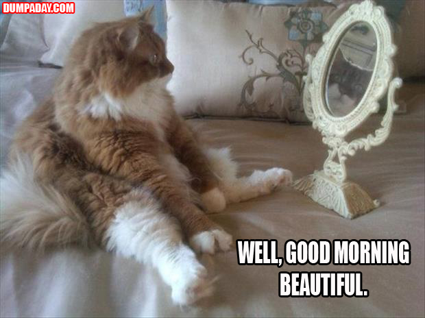funny cat looking in a mirror