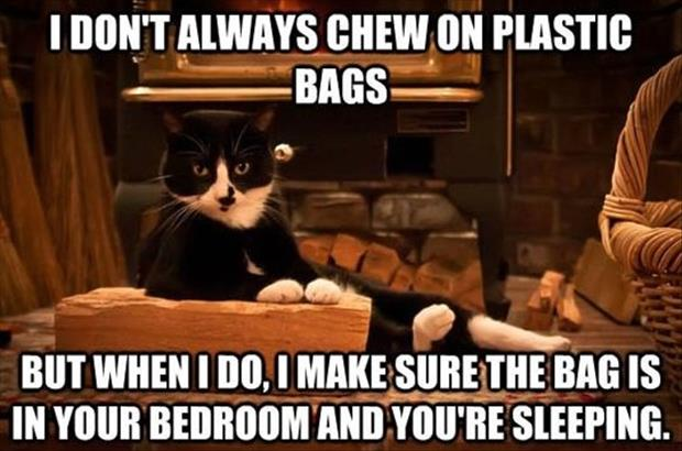 Funny Animal Picture Overload     42 PicsFunniest Cat Memes