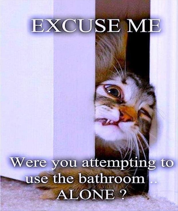 funny cat wants to go to the bathroom with you
