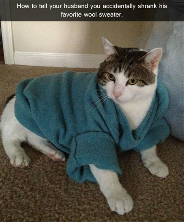 funny cat wearing a sweater