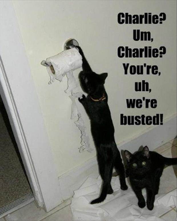 funny cats make a mess
