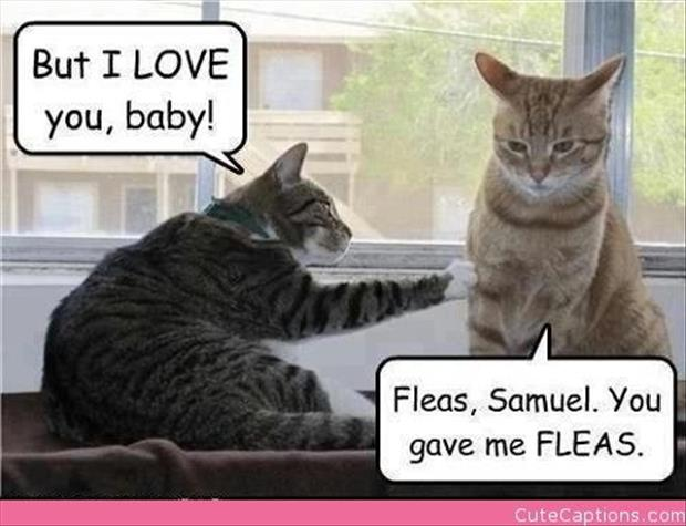 funny cats