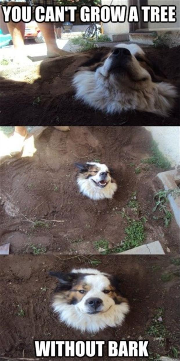 funny dog buried in a hole