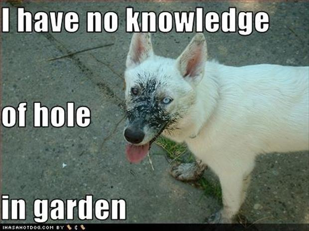 funny dog digs holes in my garden