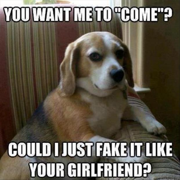 funny dog fakes it like your girlfriend