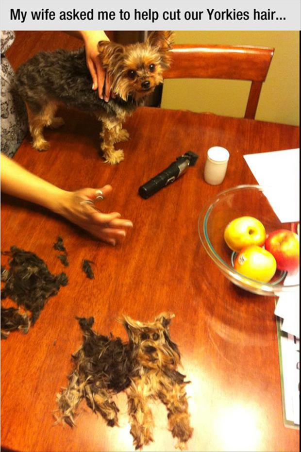 funny dog hair cutting humor