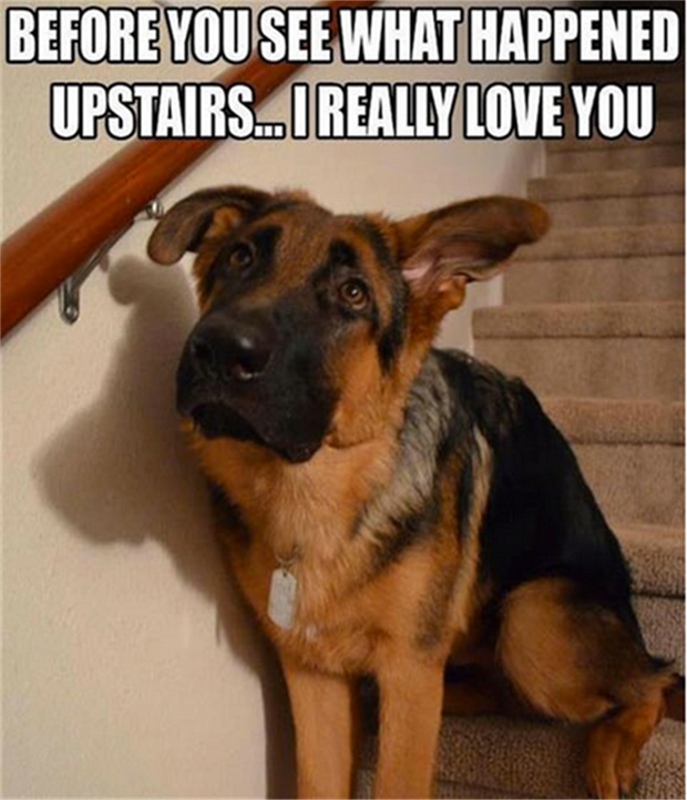 Funny dog quotes for kids - photo#48
