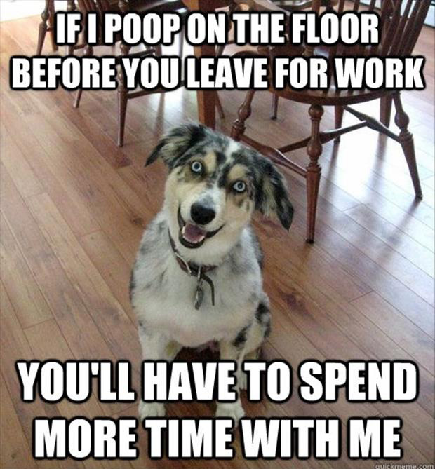 funny dog poops on the floor so you'll spend more time with him